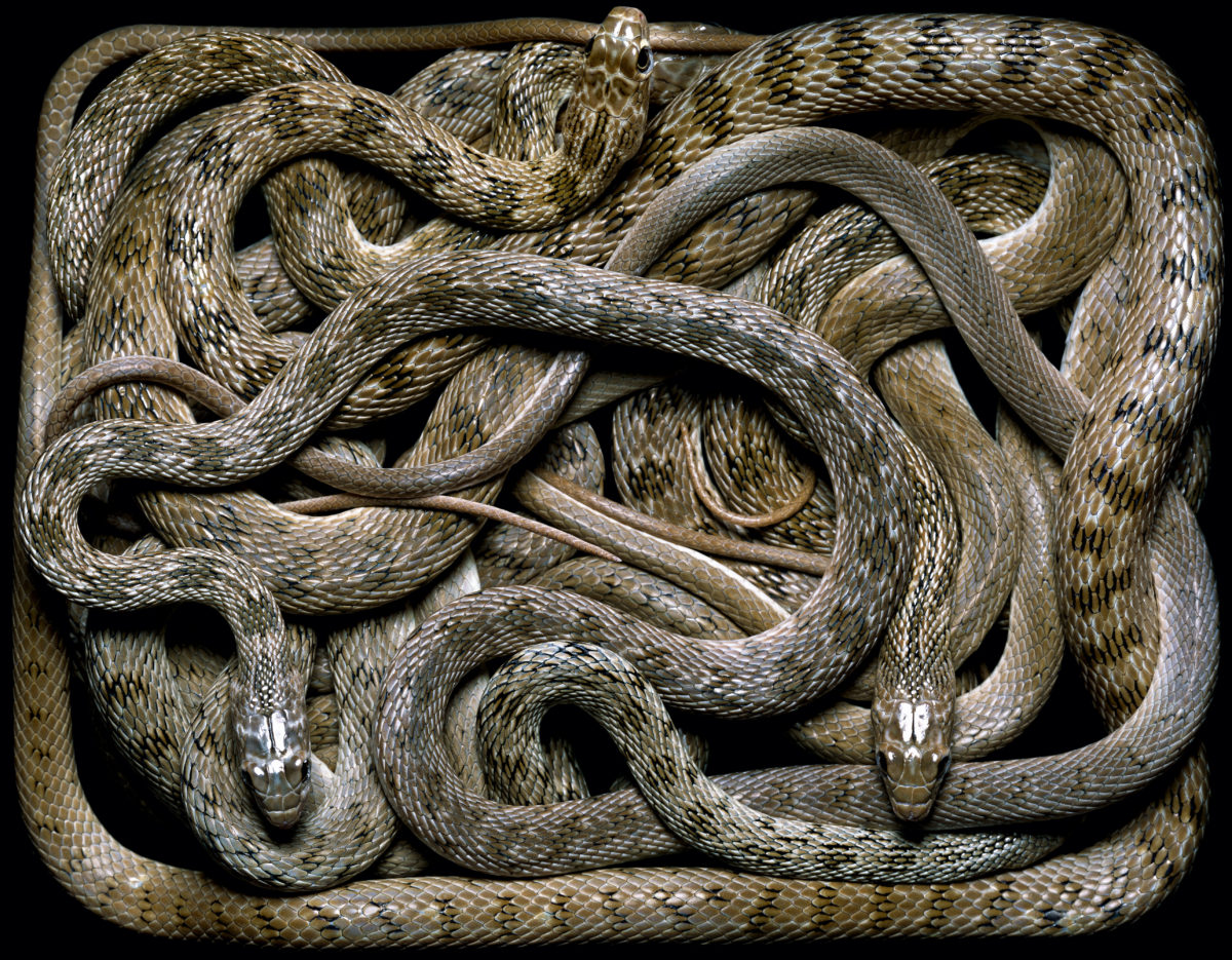 картинки рисунки фото змей расскажем, как это